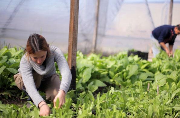 Los productos agroecológicos también forman parte de la propuesta de EME Marca Colectiva.