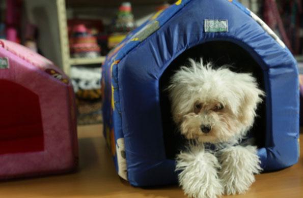 Las cuchas para perros son uno de los productos destacados.