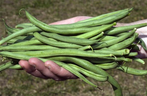 En el encuentro podrán encontrarse frutas, verduras y hortalizas de origen natural.