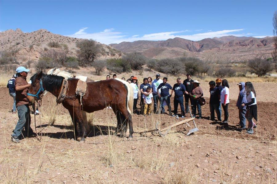 En la colonia San José, en Huacalera se limpiaron canales y se vacunaron chivos y ovejas.