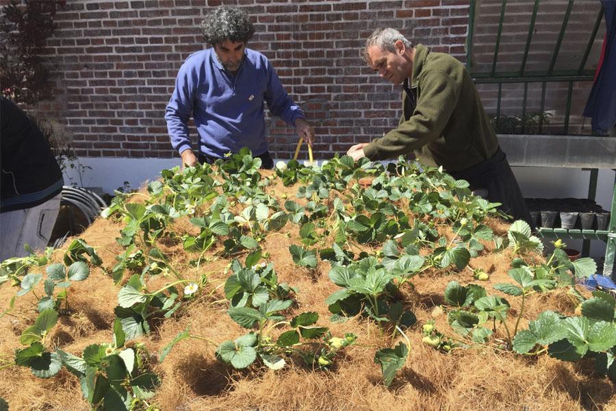 El programa Pro Huerta está destinado a la autoproducción de alimentos con bases agroecológicas.