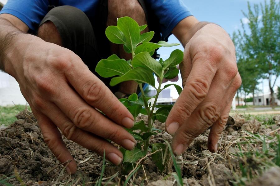 Los concursantes aprenden como plantar diferentes variedades de vegetales