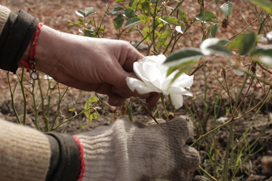 Plano detalle de las manos de Gladis con unas flores