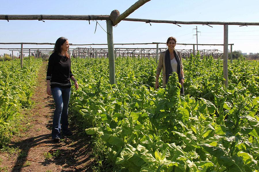 Imagen ilustrativa de la ministra recorriendo los cultivos en compañía de la primera dama, Juliana Awada.