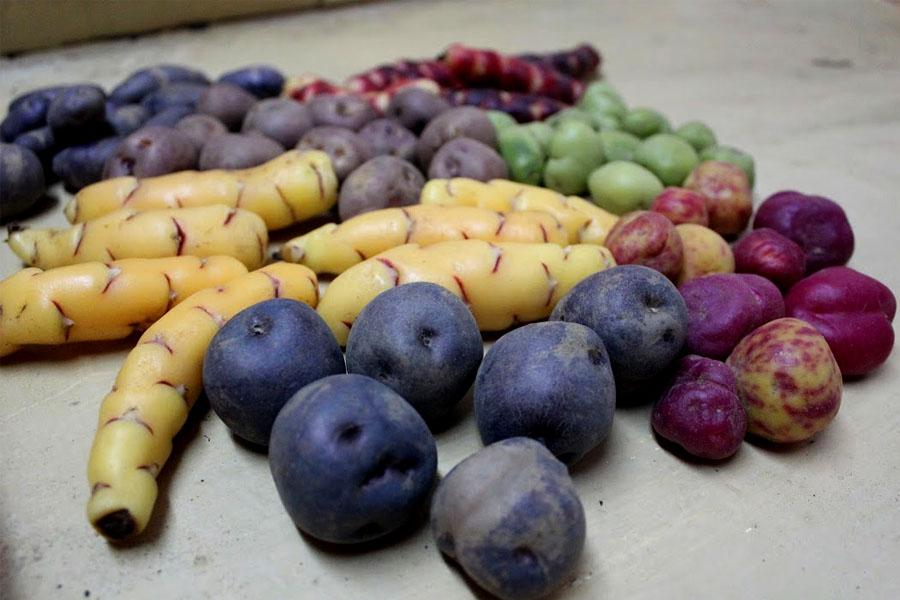 Entre todos se encargan de sembrar, cosechar y limpiar los cultivos.