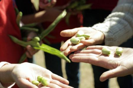 Fotografía ilustrativa de manos sosteniendo verduras.