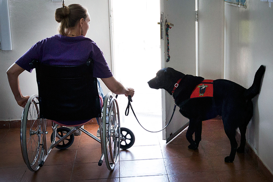 Los perros ayudan a personas con discapacidad en sus tareas diarias.