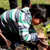 Chicos de 6 a 12 años de Tigre aprenden a cultivar alimentos agroecológicos.
