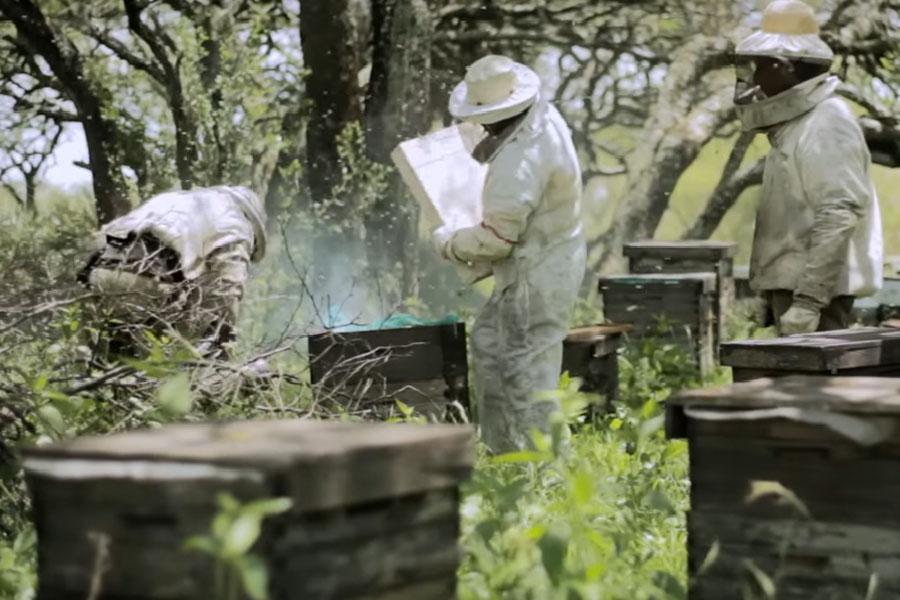 La Cooperativa El Espinal está formada por un grupo de vecinos de Entre Ríos que comercializa miel totalmente orgánica.