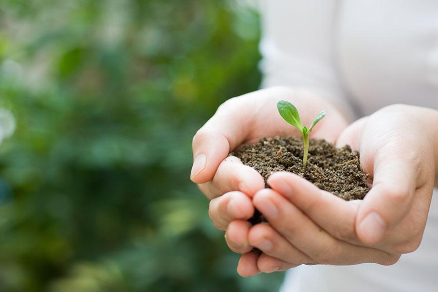 Manos sosteniendo una planta