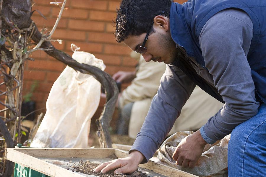 Imagen ilustrativa de un hombre cultivando