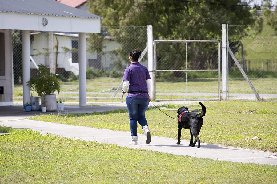 Imagen ilustrativa de personas adiestrando perros